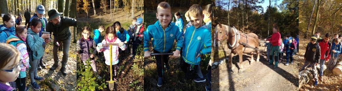 Exkurze do lesa v Kněžicích – 4. ročníky a 5. A
